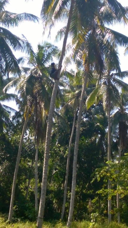 jak się wdrapać na palmę